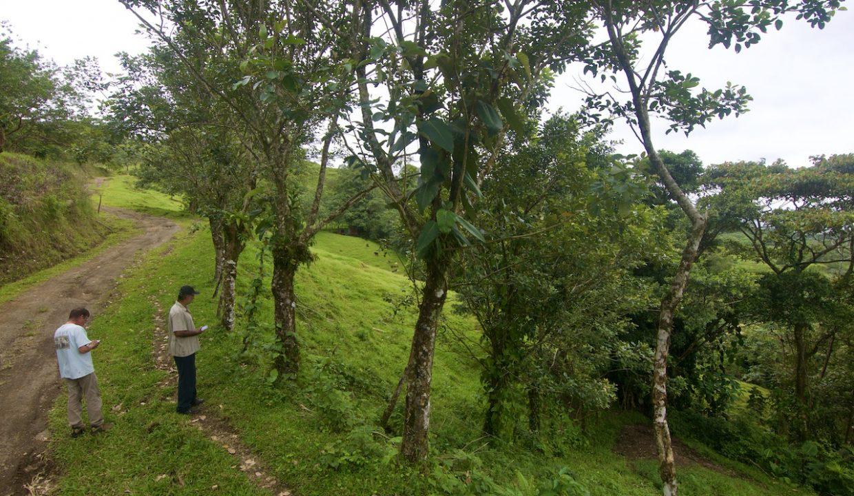 Obregon Land 1