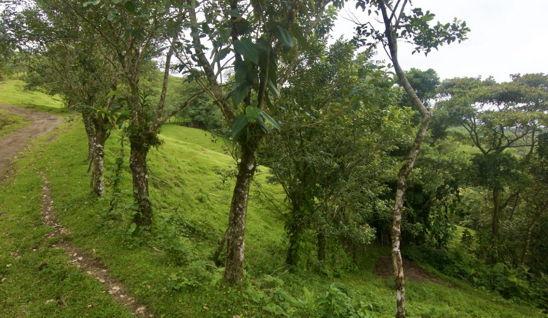Obregon Land 2