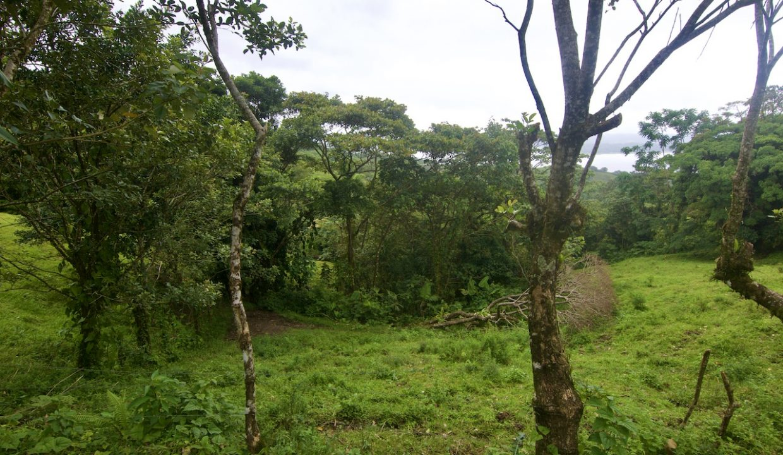 Obregon Land 3